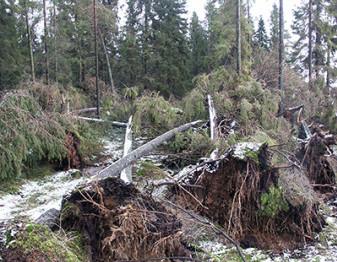 Nedfallna träd vid storm