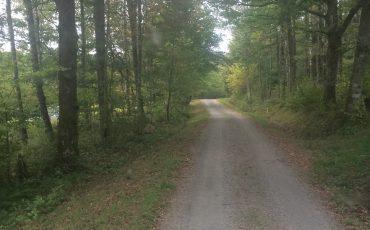 Grusväg i skogen