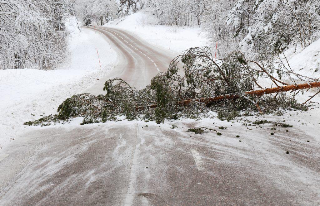 Träd blockerar vägen efter en snöstorm