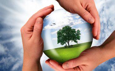 Händer som håller ett klot med ett träd på en grön äng