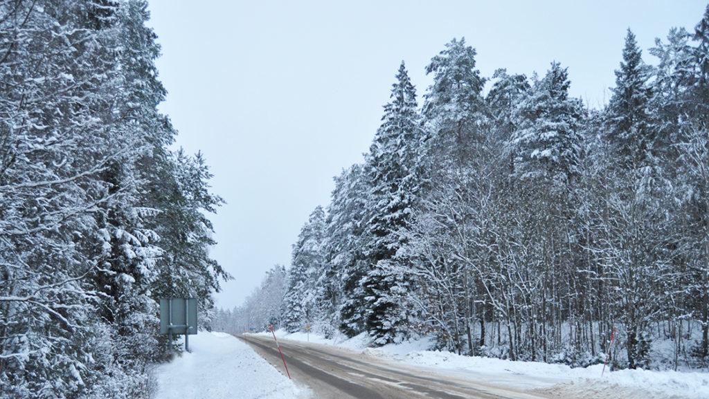 Bilväg med snötyngda granar vid sidan om.