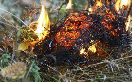 Brand i torrt fjolårsgräs
