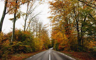 bilväg omgärdade av träd med löv i höstfärger